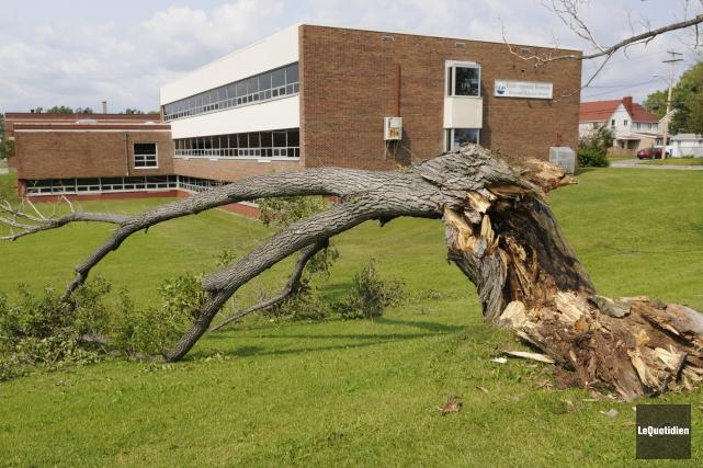 Un arbre est tombé sur les terrains de... ((Photo Le Quotidien, Marianne L. St-Gelais))