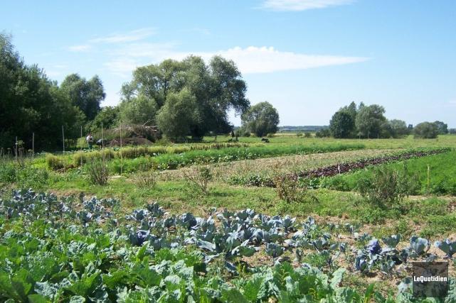 On réapprend aussi à cultiver des jardins sur... ((Archives Le Quotidien))