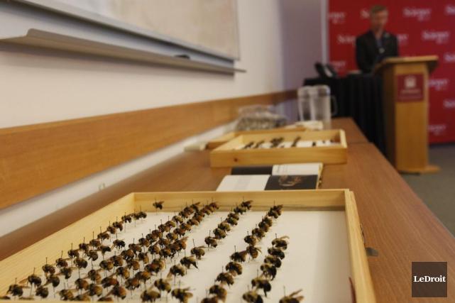 «Les pollinisateurs (comme les bourdons) sont essentiels à... (Simon Séguin-Bertrand, LeDroit)