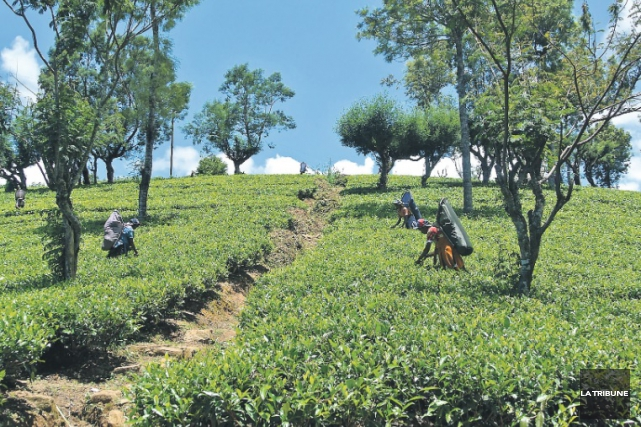 Sri Lanka signifie en français «île resplendissante». Voilà... (La Tribune, Christine Bureau)