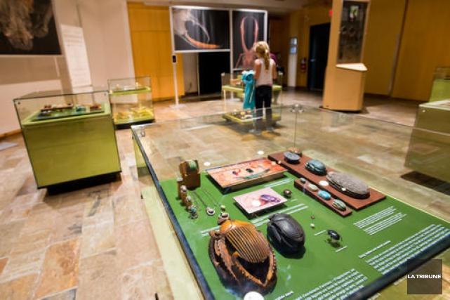 L'exposition Il était une fois... des insectes et... (IMACOM, Jessica Garneau)