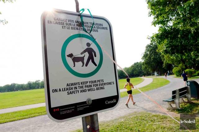 Les chiens doivent être tenus en laisse sur... (Photos Le Soleil, Erick Labbé)