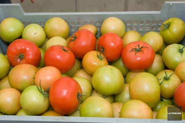 Le producteur de tomates en serres Sagami-Savoura a annoncé hier une... (Archives La Tribune)