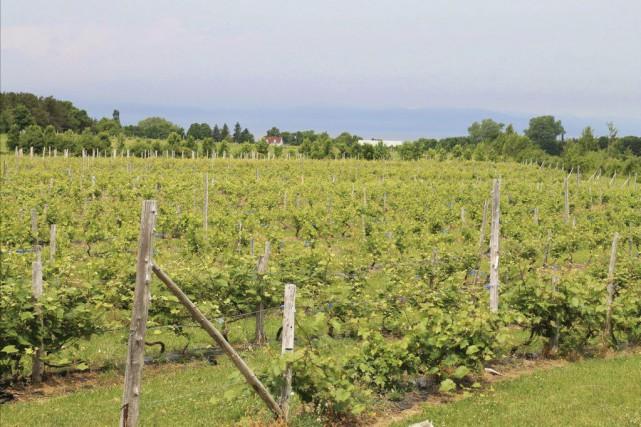 Les 18 000 pieds de vignes du vignoble... (PHOTO FOURNIE PAR LE VIGNOBLE)