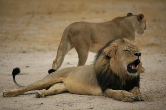 Un Américain est accusé d'avoir franchi la ligne... (Photo Parc National du Zimbabwe, AFP)