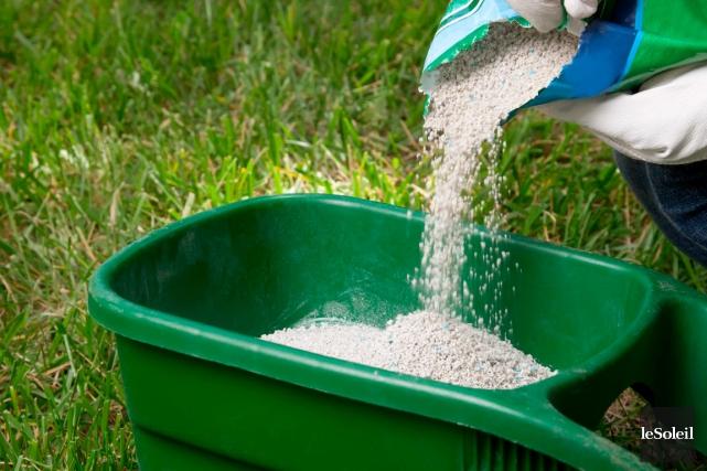 Une pelouse fertilisée rejetterait jusqu'à 50% moins de... (Photothèque Le Soleil)