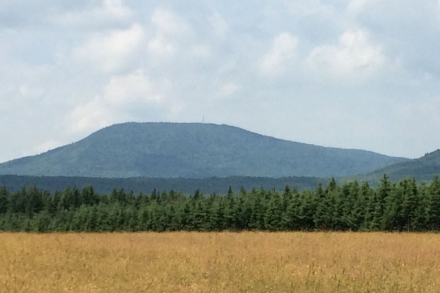 Le mont Hereford, qui longe les frontières du... (Courtoisie, Forêt Hereford)