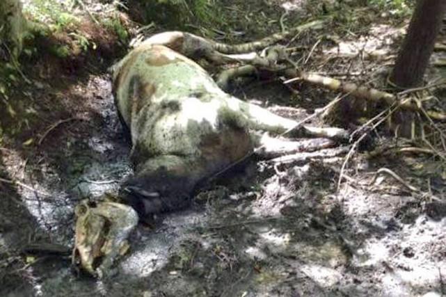 Deux chevaux ont été retrouvés morts dans un... (photo tirée de Facebook)