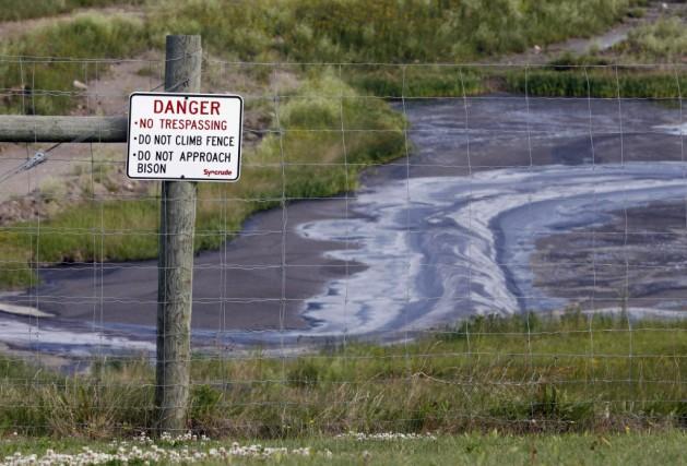 La cause du décès des hérons bleus, dont... (Photo Jeff McIntosh, La Presse canadienne)