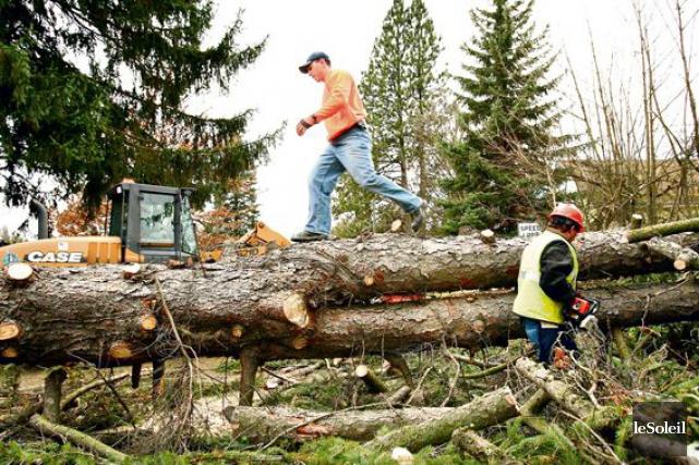 L'industrie forestière de la Côte-Nord, qui comprend Rémabec,... (Photothèque Le Soleil)