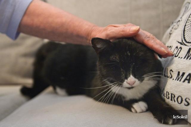 La petite chatte aveugleBuffy a retrouvé ses maîtres.... (Le Soleil, Yan Doublet)