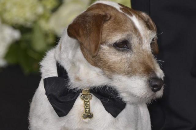Uggie, le terrier Jack Russell qui avait (presque) volé la vedette à Jean... (PHOTO ARCHIVES AFP)