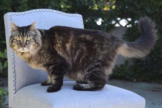 Corduroy, le plus vieux chat du monde répertorié,... (Photo Reuters)
