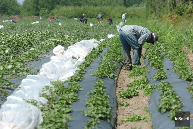 Environ la moitié des travailleurs étrangers qui viennent... (Photothèque Le Soleil)