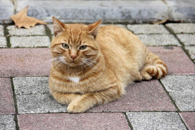 Le chat appartiendrait à un couple de personnes... (Photo Digital/Thinkstock)