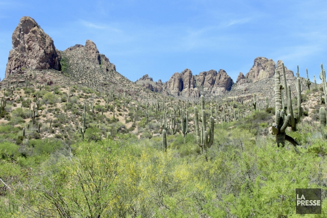 Tout près de Phoenix, en Arizona, l'Apache Trail... (Photo Simon Chabot, La Presse)