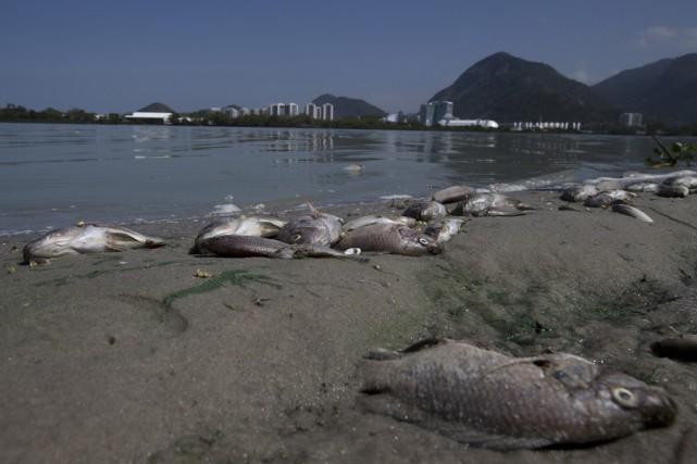 Ces poissons sont probablement morts à cause du... (Photo AP)