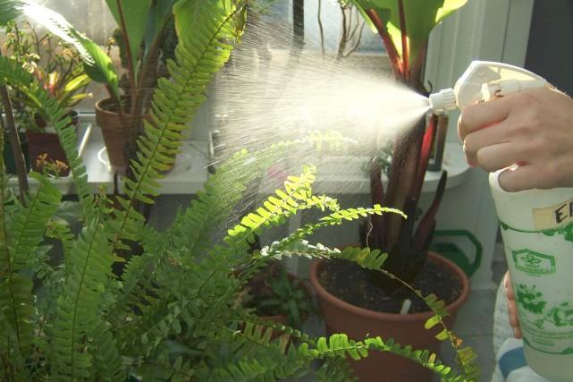 Les remèdes maison sont souvent faciles à fabriquer,... (Photo www.jardinierparesseux.com)