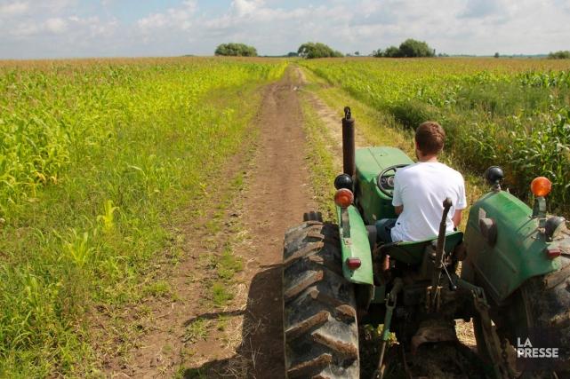 Les premiers agriculteurs franco-ontariens produisent surtout du blé... (Archives La Presse)