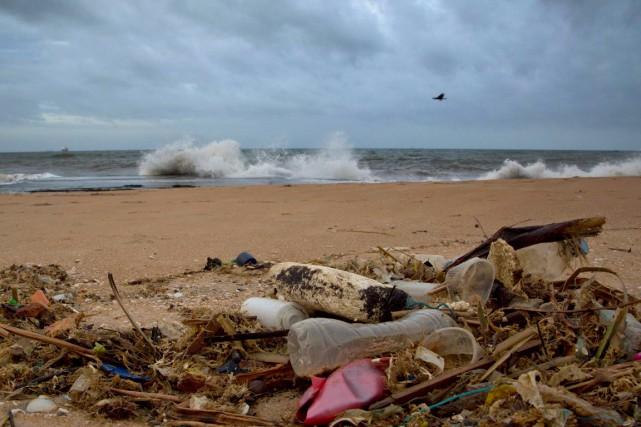 La majorité des oiseaux marins à travers le monde a déjà ingurgité du... (PHOTO ARCHIVES AP)