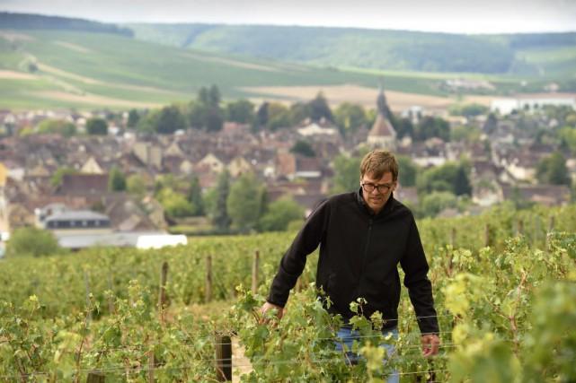 Le vignoble chablisien s'étend sur un peu plus... (PHOTO ERIC FEFERBERG, AFP)