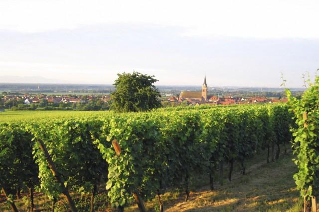 Cette année, la production nationale de vin devrait... (Photos.com)