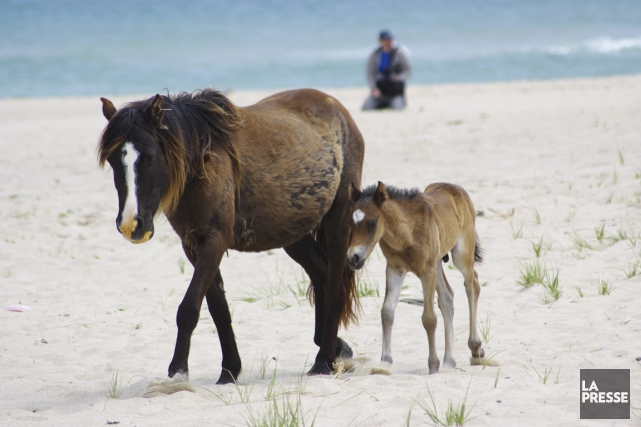 Selon la légende, les chevaux auraient échappé à... (Photo Marie Tison, La Presse)