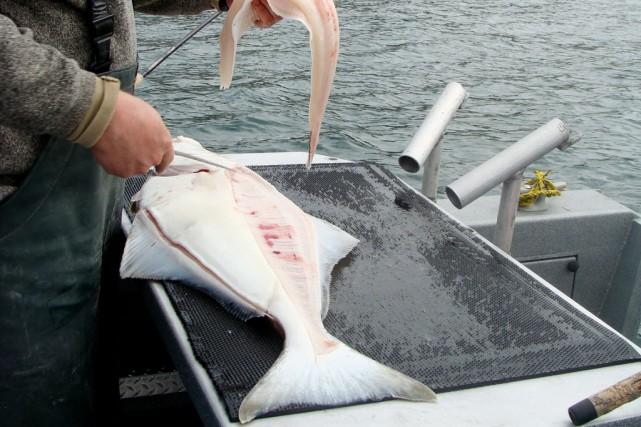 Cette année, la saison de pêche au flétan... (PHOTO TIRÉE DE WIKIPEDIA)