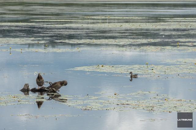 L'étang Burbank de Danville est l'un des paradis... (PHOTO FRÉDÉRIC CÔTÉ, FOURNIE PAR IMACOM)