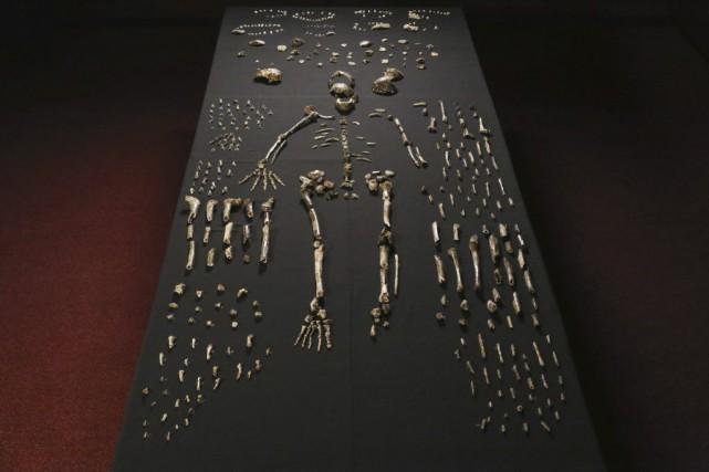 Les ossements exhumés en Afrique du Sud représentent... (PHOTO JOHN HAWKS, AGENCE FRANCE-PRESSE)