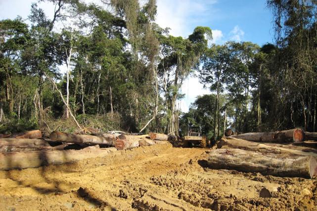 Le couvert forestier mondial perd 33000 kilomètres carrés... (PHOTO DELPHINE RAMOND, ARCHIVES AFP)