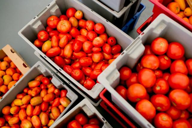 «Si la tomate inspirait jadis la crainte, c'est... (Photo David Boily, archives La Presse)