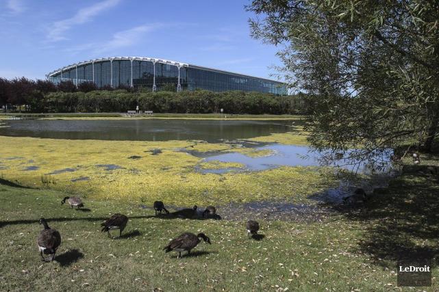 Des algues vertes recouvrent la surface de l'étang... (Patrick Woodbury, LeDroit)