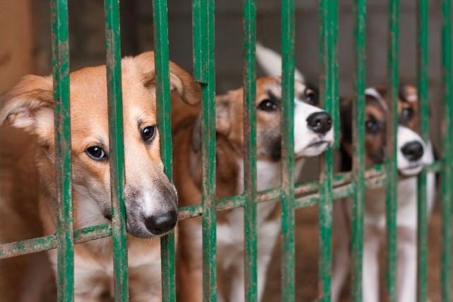 Avec les contraintes actuelles, une usine à chiens... (Photo Shutterstock, Roman Samokhin)