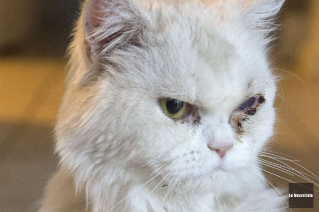 Le chat Vivaldi l'a échappé belle. Il a... (Photo: Stéphane Lessard, Le Nouvelliste)
