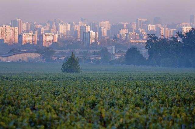 Le domaine Cousiño Macul se trouve tout près... (Photo fournie par Cousiño Macul)