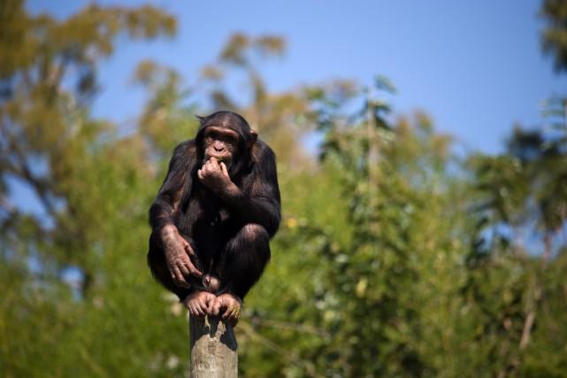 Boucar Diouf cite le paléoanthropologue français Pascal Picq,... (PHOTO THINKSTOCK)