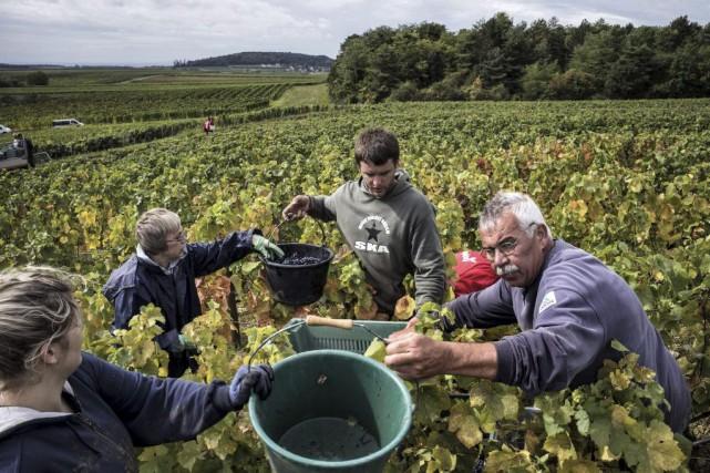 Les vins du Bourguignon Henri Jayer ont beau atteindre 15 000 euros (22 000 $)... (PHOTO AFP)