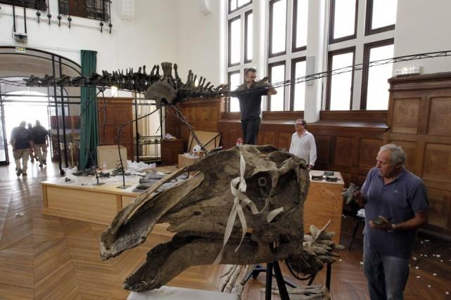 Des fossils de dinosaures sont exposés à Paris.... (PHOTO PATRICK KOVARIK, ARCHIVES AFP)