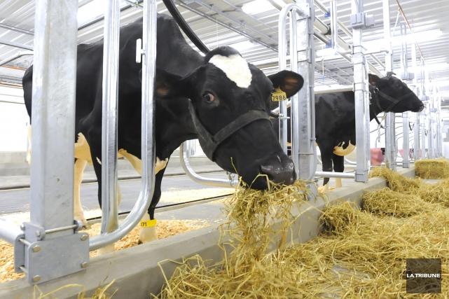 Producteur laitier depuis plus de10 ans, je m'inquiète pour notre agriculture.... (Archives La Tribune)
