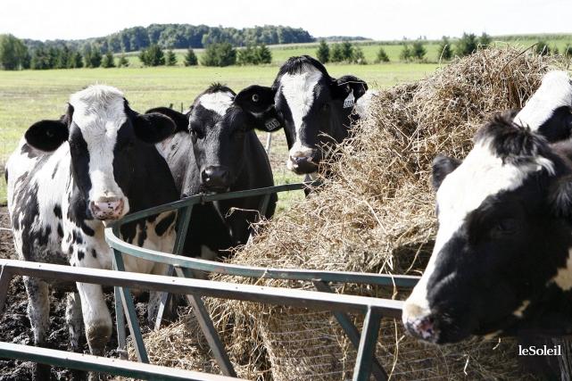 Au Canada, le secteur laitier n'ouvre que 10%... (Photothèque Le Soleil)