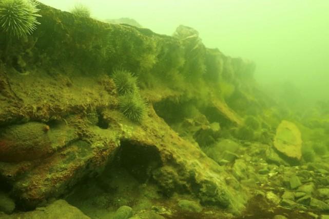 Une partie de l'épave enfouie dans les profondeurs... (FOURNIE PAR URBANIA TV)