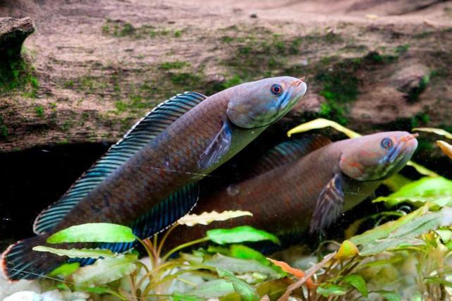 Parmi les plus de 200 espèces découvertes, le... (PHOTO HENNING STRACK HANSEN, WWF)