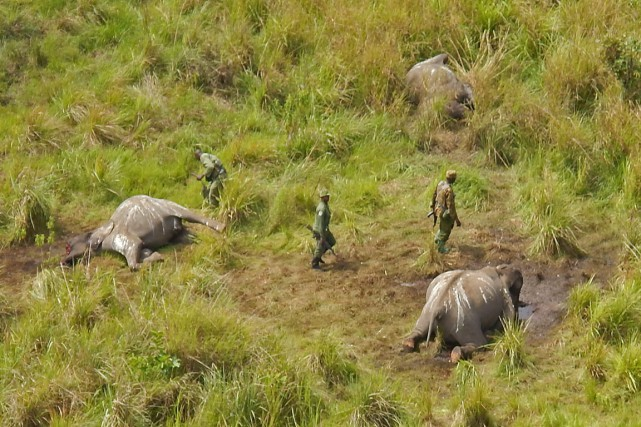 Le 14 mai 2014, des employés du parc... (Photo archives African Parks/AP)