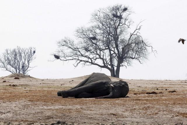 Le braconnage, qui vise essentiellement les rhinocéros et... (PHOTO PHILIMON BULAWAYO, ARCHIVES REUTERS)
