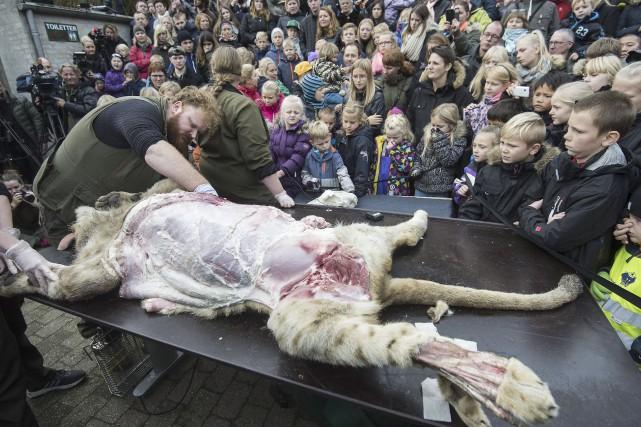 Un employé a dépouillé le lion sous le... (AFP, Claus Fisker)