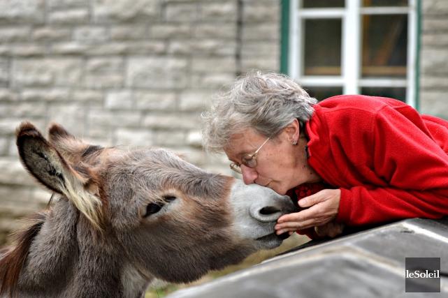 L'âne Aldo est tellement précieux pour le Vieux-Québecqu'il... (Le Soleil, Pascal Ratthé)