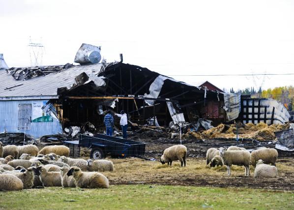 Un incendie a détruit une partie des installations d'une ferme, précisément une... (Photo: Andréanne Lemire)