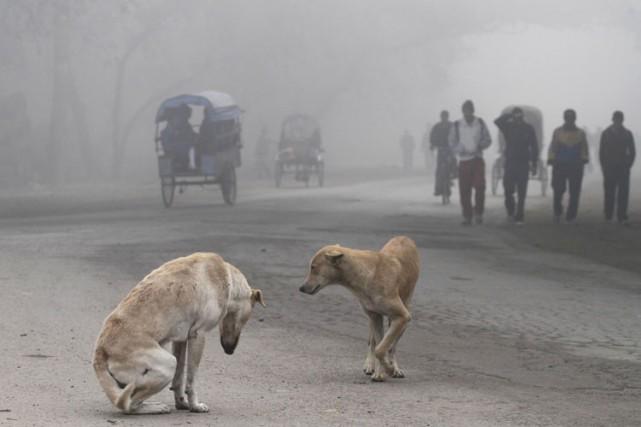 Les chiens auraient été initialement domestiqués en Asie centrale dont au Népal... (ARCHIVES AP)