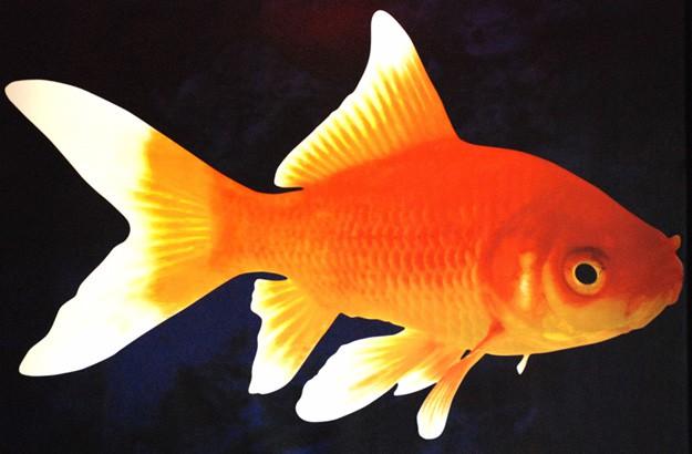 L'eau est aux poissons ce que la culture est à l'Homme. À la fois une absolue...
